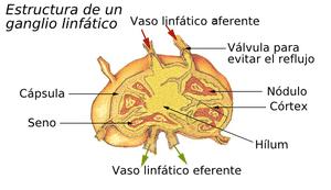 Drenajes linfáticos - foto 2