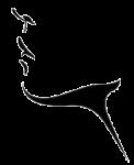Cuello y papada